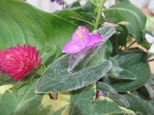 flower(2021.10.14)